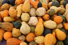 Τολμηρή και ζωηρόχρωμη εικόνα υποβάθρου των φωτεινών πορτοκαλιών, πράσινων και άσπρων κολοκυθών και της κολοκύνθης για την πώληση στοκ εικόνες