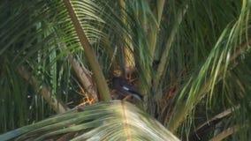 Τολμηρό πουλί Στοκ εικόνες με δικαίωμα ελεύθερης χρήσης
