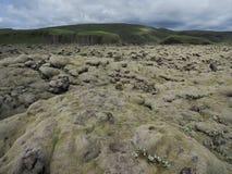 Τομέας λάβας στην Ισλανδία, βρύο στους βράχους Στοκ Εικόνα
