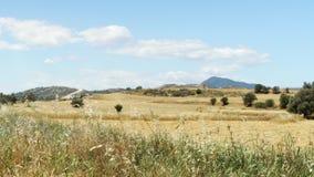 Τομέας άνοιξη κάτω από το μπλε ουρανό στη Λάρνακα, Κύπρος Αγροτικό τοπίο της χλόης και των δέντρων την ηλιόλουστη ημέρα απόθεμα βίντεο