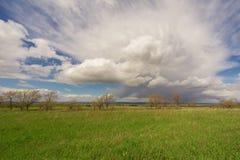 Τομέας, δέντρα και μπλε ουρανός Στοκ Εικόνα