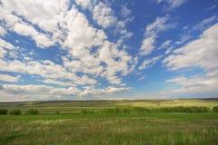 Τομέας, δέντρα και μπλε ουρανός Στοκ Εικόνες