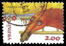 Τομέας αλόγων και σίτου Στοκ εικόνα με δικαίωμα ελεύθερης χρήσης