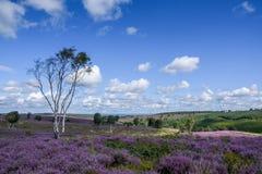Τομέας αυλακώματος Cannock της σημαντικής φυσικής ομορφιάς σε Staffordshire Στοκ Εικόνες
