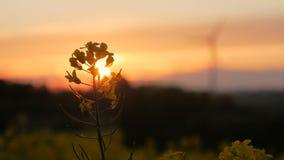 Τομέας βιασμών - ηλιοβασίλεμα με τον ανεμοστρόβιλο φιλμ μικρού μήκους