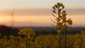 Τομέας βιασμών - ηλιοβασίλεμα με τον ανεμοστρόβιλο απόθεμα βίντεο