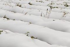 Τομέας γεωργίας, καρότα Στοκ εικόνες με δικαίωμα ελεύθερης χρήσης