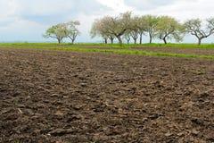 Τομέας γεωργίας με τα μαύρα δέντρα χώματος και κερασιών στην άνοιξη Στοκ εικόνα με δικαίωμα ελεύθερης χρήσης
