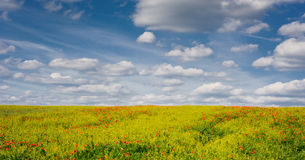 Τομέας εγκαταστάσεων βιασμών παπαρουνών και ελαιοσπόρων με το νεφελώδη μπλε ουρανό, τσεχική επαρχία Στοκ Εικόνες