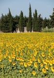 Τομέας ηλίανθων κοντά σε Arles στην Προβηγκία, Στοκ Εικόνες