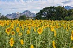 Τομέας ηλίανθων με τα βουνά και τον ουρανό στοκ φωτογραφία με δικαίωμα ελεύθερης χρήσης