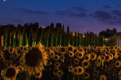 Τομέας ηλίανθων στο σούρουπο με τον ουρανό λουλακιού, Ουμβρία, Ιταλία Στοκ Εικόνες