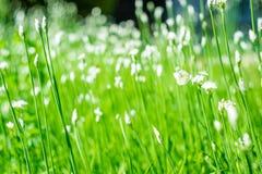 Τομέας θερινού νότου λουλουδιών Στοκ φωτογραφία με δικαίωμα ελεύθερης χρήσης