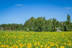 Τομέας θερινού νότου λουλουδιών Στοκ φωτογραφίες με δικαίωμα ελεύθερης χρήσης