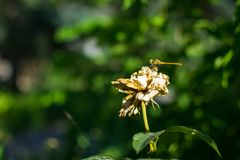 Τομέας θερινού νότου λουλουδιών Στοκ Φωτογραφίες