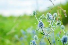Τομέας θερινού νότου λουλουδιών Στοκ Φωτογραφία