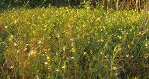 Τομέας λιβαδιών λουλουδιών στη θυελλώδη ημέρα φιλμ μικρού μήκους