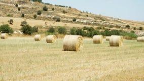 Τομέας κάτω από το μπλε ουρανό στη Λάρνακα, Κύπρος Αγροτικό τοπίο με τις χρυσές θυμωνιές χόρτου την ειδυλλιακή ηλιόλουστη ημέρα απόθεμα βίντεο