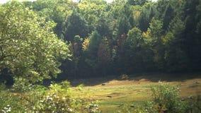 Τομέας και δάσος με τις λιβελλούλες φιλμ μικρού μήκους
