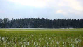Τομέας και δασικό χειμερινό τοπίο Στοκ Φωτογραφία