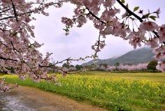Τομέας και βουνό λουλουδιών κοντά στο πάρκο πορσελάνης Tian, μυθιστόρημα-γνώση, Ιαπωνία Στοκ εικόνα με δικαίωμα ελεύθερης χρήσης