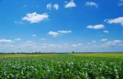 Τομέας και μπλε ουρανός καλαμποκιού Στοκ φωτογραφία με δικαίωμα ελεύθερης χρήσης