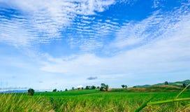 Τομέας και ουρανός καλαμποκιού με τα όμορφα σύννεφα Στοκ Εικόνα