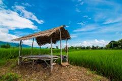 Τομέας και ουρανός ρυζιού Στοκ φωτογραφίες με δικαίωμα ελεύθερης χρήσης