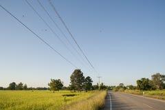 Τομέας και δρόμος ρυζιού. Στοκ φωτογραφία με δικαίωμα ελεύθερης χρήσης