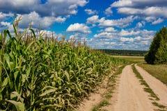 Τομέας καλαμποκιού και αγροτικός βρώμικος δρόμος στοκ εικόνες με δικαίωμα ελεύθερης χρήσης