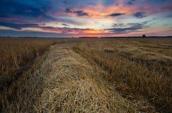 Τομέας καλαμιών στο ηλιοβασίλεμα, τοπίο με τα θεαματικά σύννεφα Στοκ Εικόνες
