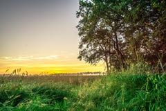 Τομέας καλαμποκιού στην ανατολή με τα δέντρα Στοκ εικόνα με δικαίωμα ελεύθερης χρήσης