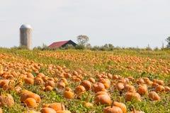 Τομέας κολοκύθας σε ένα αγρόκτημα χωρών, τοπίο φθινοπώρου Στοκ Φωτογραφία