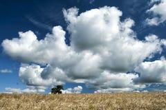 Τομέας κριθαριού με το δέντρο, τον ουρανό και τα σύννεφα Στοκ Εικόνες