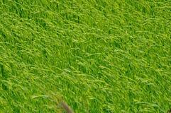 Τομέας λιναριού στοκ φωτογραφία με δικαίωμα ελεύθερης χρήσης