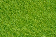 Τομέας λιναριού στοκ φωτογραφία