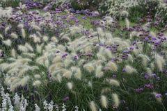 Τομέας λουλουδιών με τη χλόη φτερών Στοκ φωτογραφία με δικαίωμα ελεύθερης χρήσης