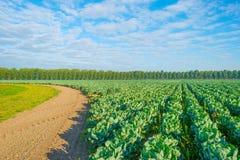 Τομέας με τα λαχανικά Στοκ φωτογραφίες με δικαίωμα ελεύθερης χρήσης