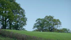 Τομέας με τα μεγάλα δέντρα στο θυελλώδες αγροτικό τοπίο απόθεμα βίντεο