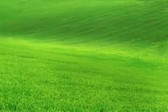 Τομέας με την πράσινη χλόη και μπλε ουρανός με τα σύννεφα στο αγρόκτημα στην όμορφη θερινή ηλιόλουστη ημέρα Καθαρός, ειδυλλιακός, στοκ εικόνα με δικαίωμα ελεύθερης χρήσης