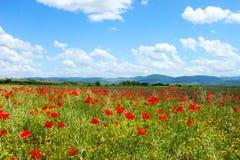 Τομέας με την πράσινη χλόη, τα κίτρινα λουλούδια και τις κόκκινες παπαρούνες στοκ εικόνα με δικαίωμα ελεύθερης χρήσης