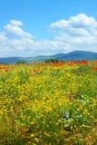Τομέας με την πράσινη χλόη, τα κίτρινα λουλούδια και τις κόκκινες παπαρούνες στοκ φωτογραφία