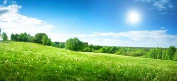 Τομέας με τις πικραλίδες και το μπλε ουρανό Στοκ εικόνα με δικαίωμα ελεύθερης χρήσης