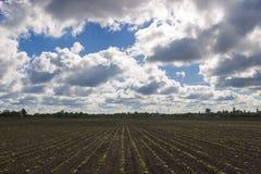 Τομέας με τους νέους βλαστούς ενάντια στον ουρανό με τα σύννεφα Στοκ φωτογραφίες με δικαίωμα ελεύθερης χρήσης