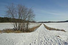 Τομέας με το χιόνι στοκ εικόνα