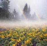 Τομέας με το kalyuzhnitsa άνθισης Στοκ φωτογραφίες με δικαίωμα ελεύθερης χρήσης