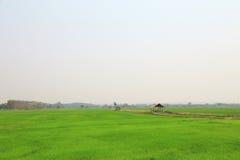 Τομέας ορυζώνα ή τομέας ρυζιού με το εξοχικό σπίτι Στοκ Εικόνες
