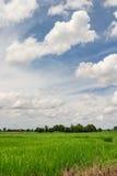 Τομέας ορυζώνα ρυζιού και νεφελώδης Στοκ φωτογραφία με δικαίωμα ελεύθερης χρήσης