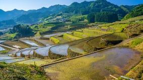 Τομέας ορυζώνα ρυζιού στην Ιαπωνία στοκ φωτογραφία