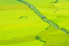Τομέας ορυζώνα ρυζιού Στοκ Φωτογραφίες